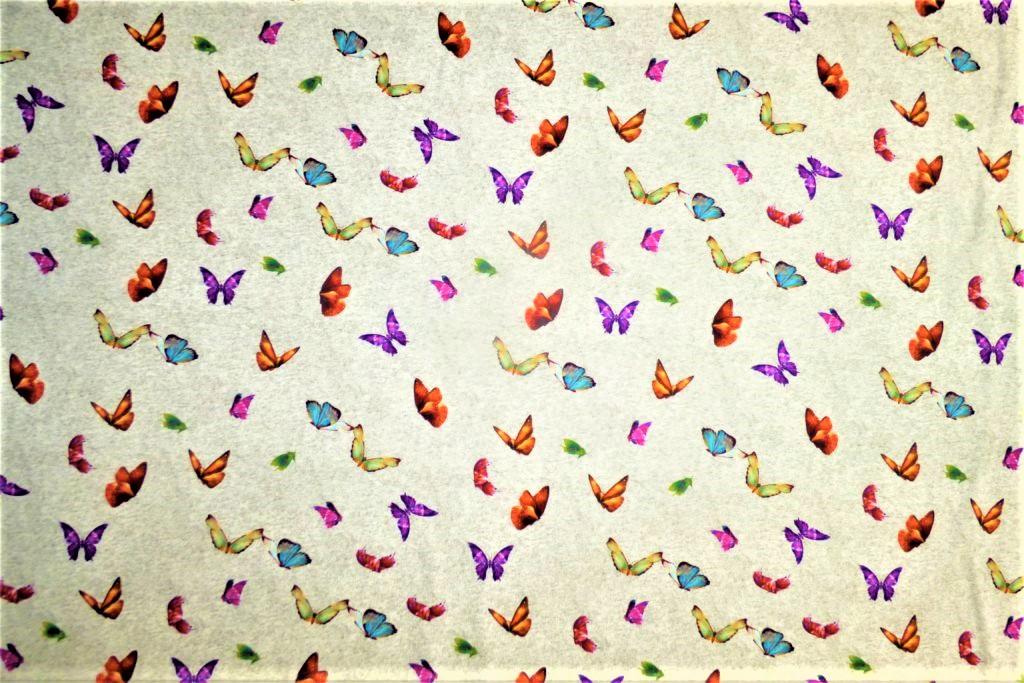 Papillon-gris-JI17-1024×683