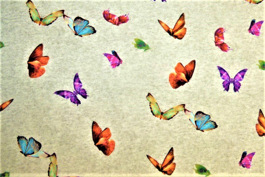 Papillon-gris1-JI17-1024×683